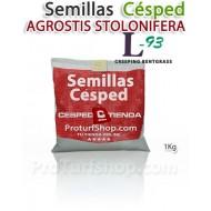 Semillas Césped Agrotis Stolonifera L-93 1Kg.(Promoción Envío Gratis*)