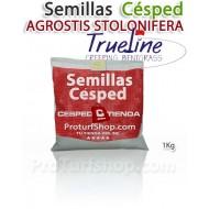 Semillas Césped Agrotis Stolonifera Trueline 1Kg.(Promoción Envío Gratis*)