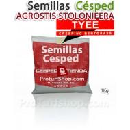 Semillas Césped Agrotis Stolonifera Tyee 1Kg.(Promoción Envío Gratis*)